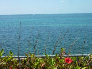 青い海とお花