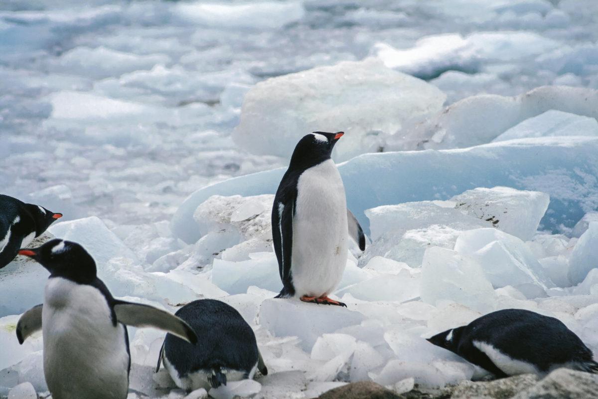 ひとりぼっちのペンギン