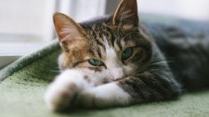 ダラダラする猫