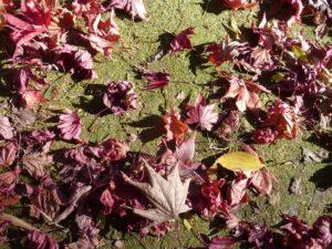 落ち葉と地面