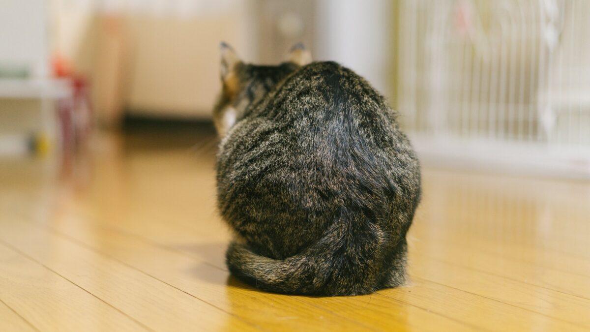 ネコの後ろ姿