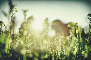暖かい日差しと植物