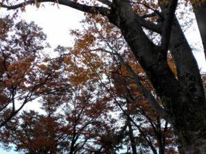 けやき並木の紅葉