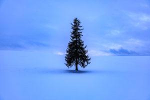 ポツンと立つ木