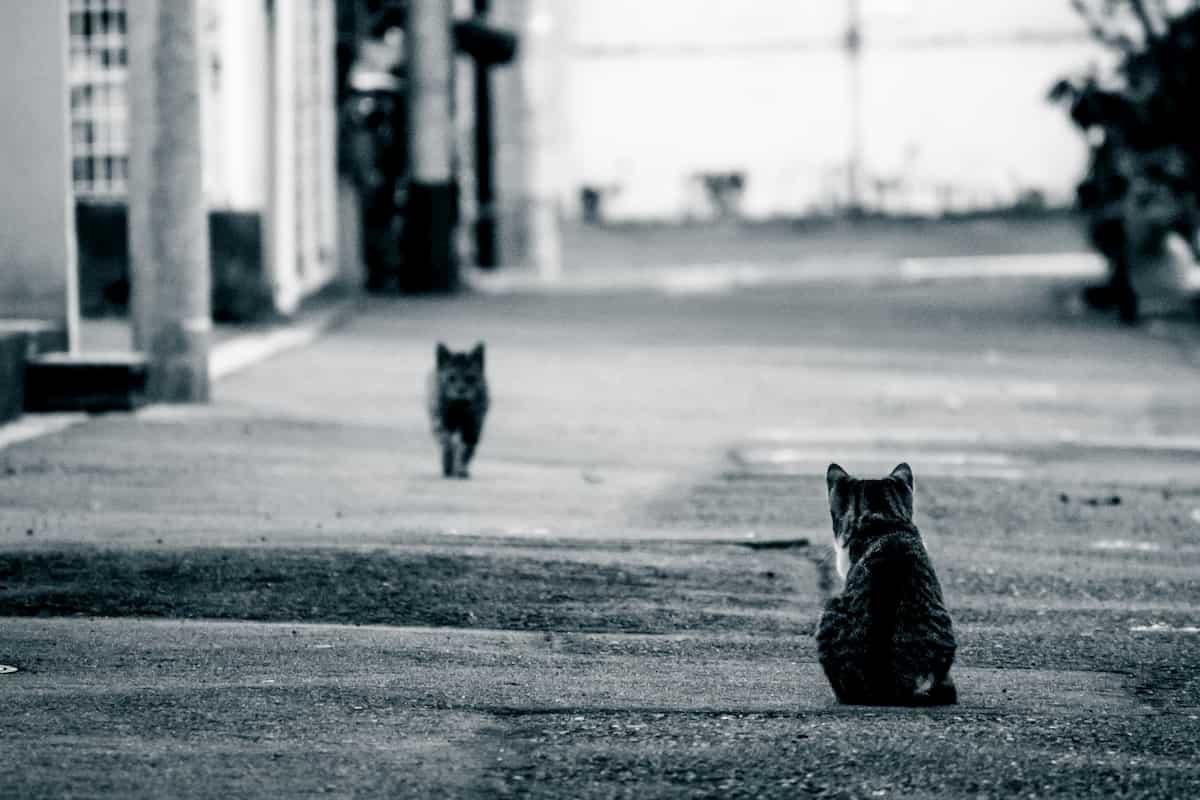 距離をとるネコ
