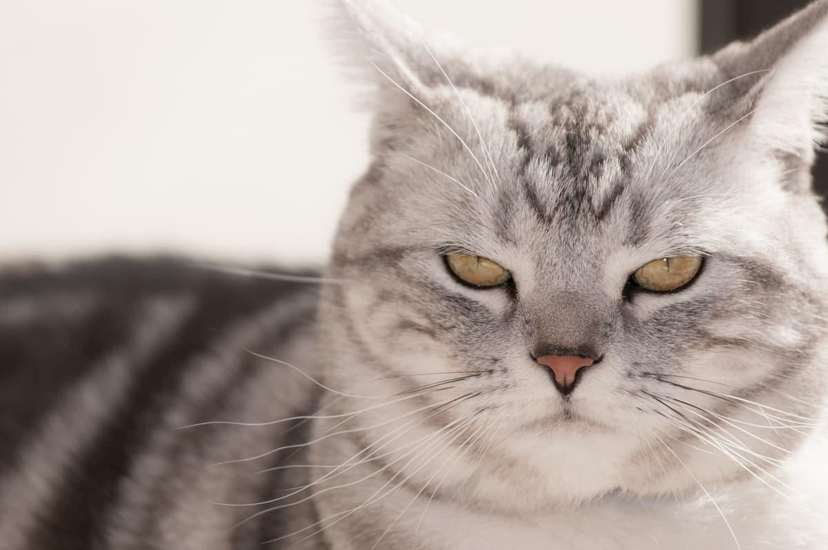不機嫌なネコ